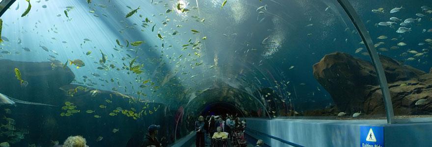 aquariums privés